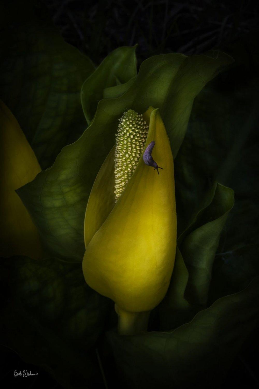 Wilbert Swamp Lantern