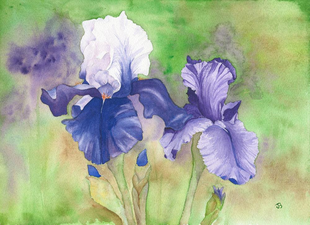 Jane's Iris
