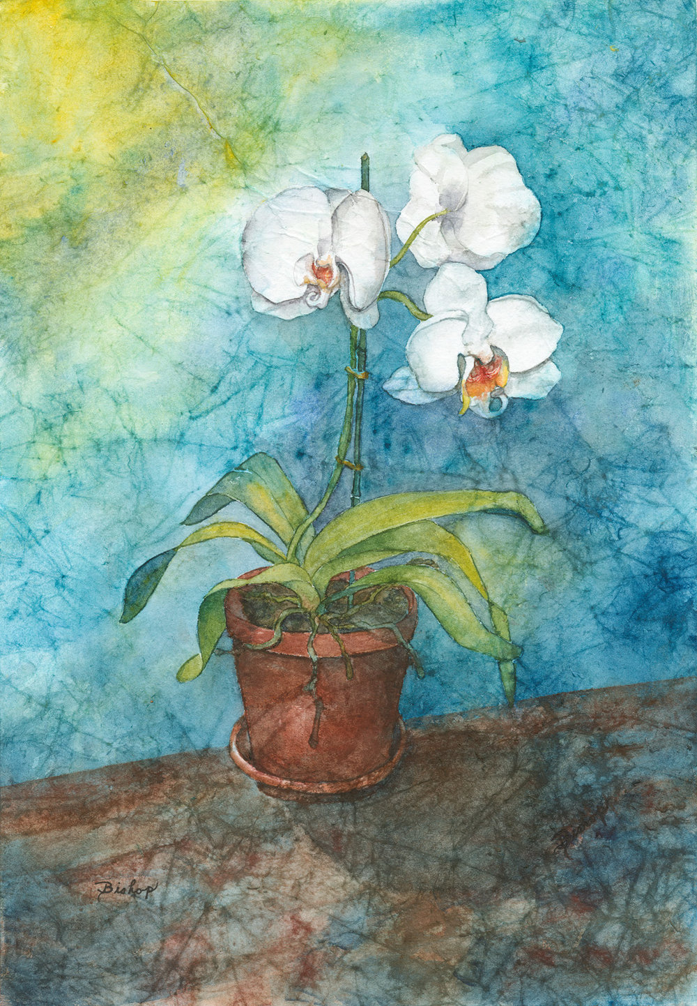 Kathy's Orchid