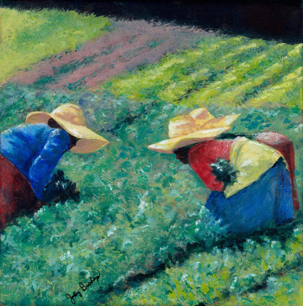 Harvest Hats