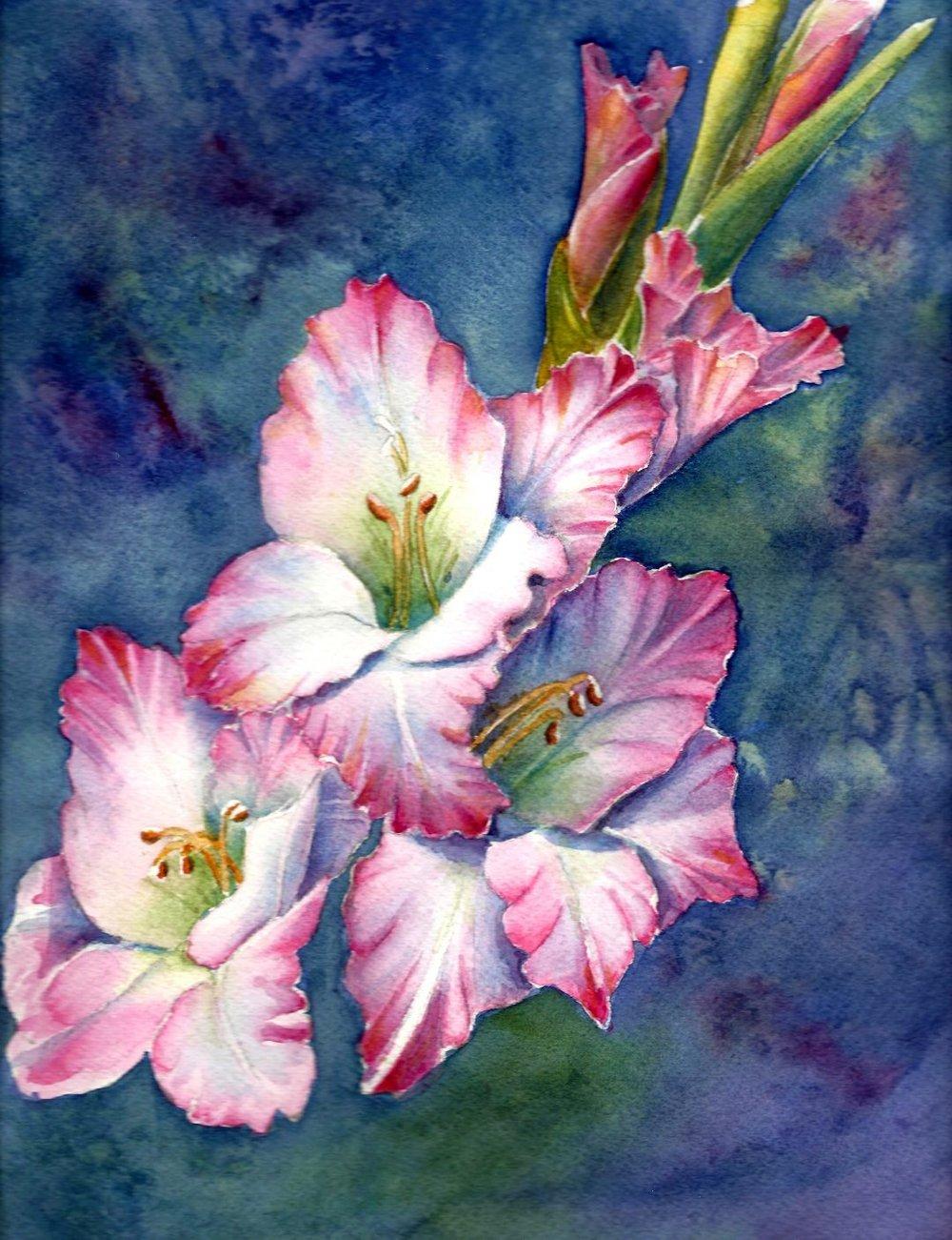 Garden Series Gladiolus
