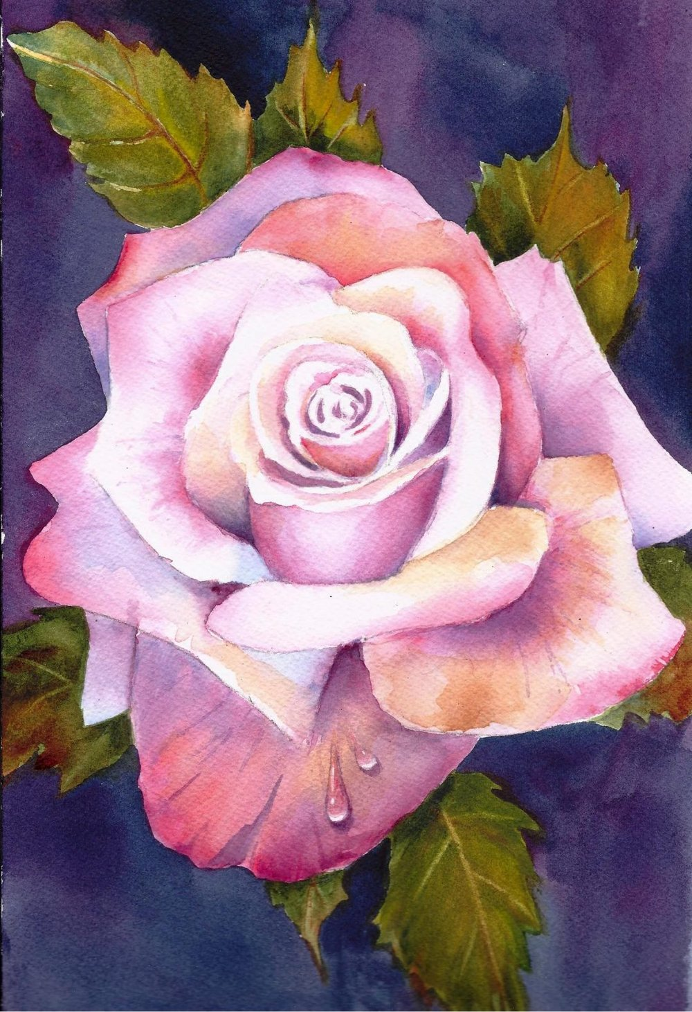 Garden Series Rose