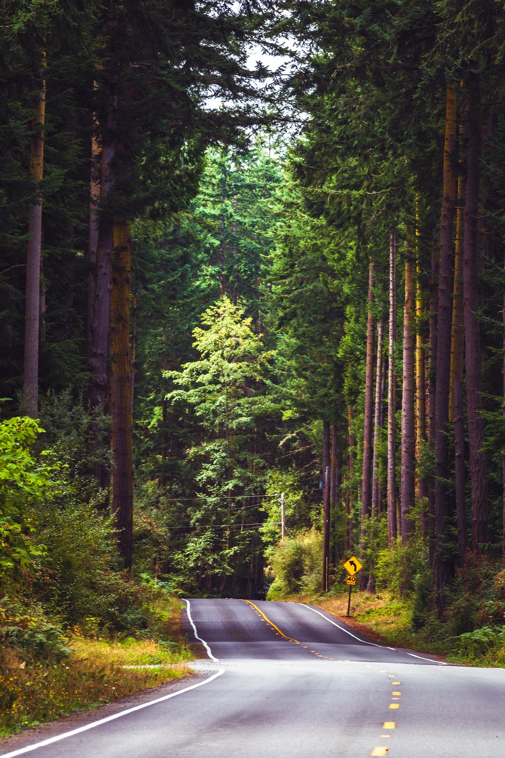 Whidbey Backroads