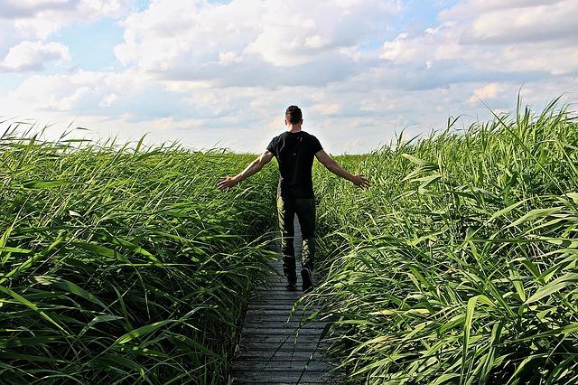 high-grass-1504280_640.jpg