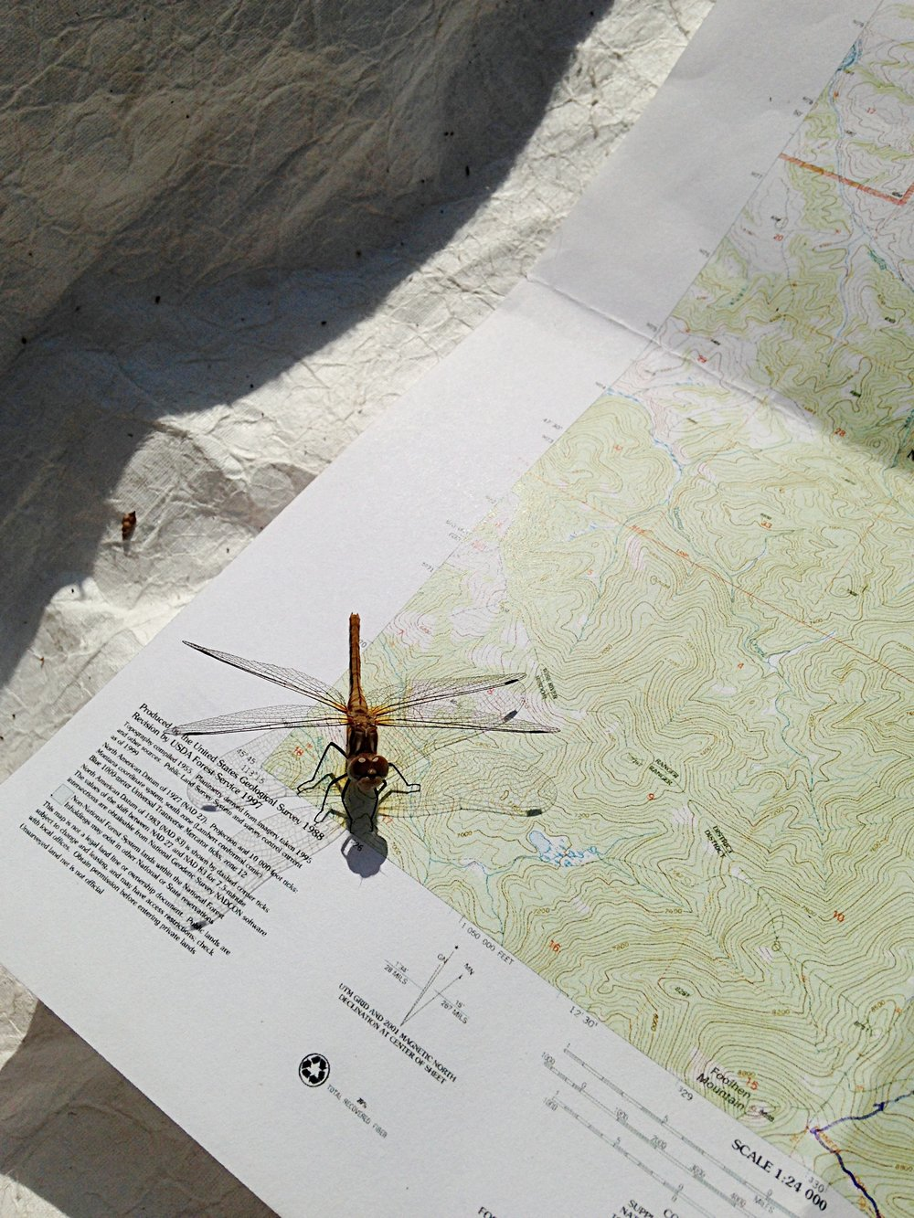 Getting route finding advice from a dragonfly.