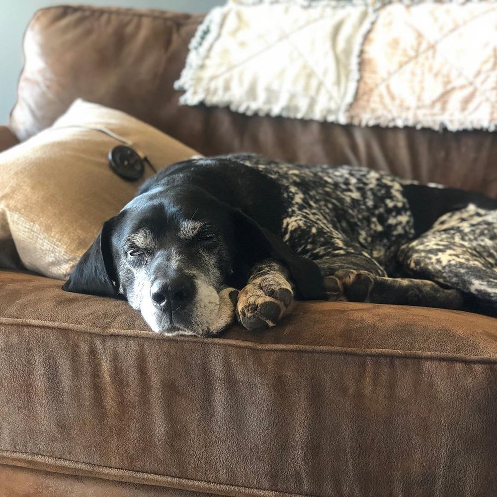 Grandpa Rex napping on the couch