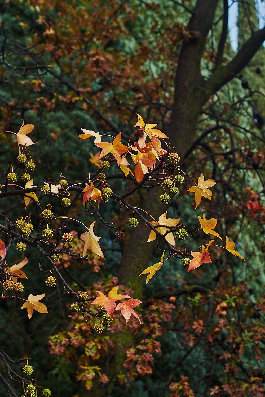 autumn2018 031.jpg