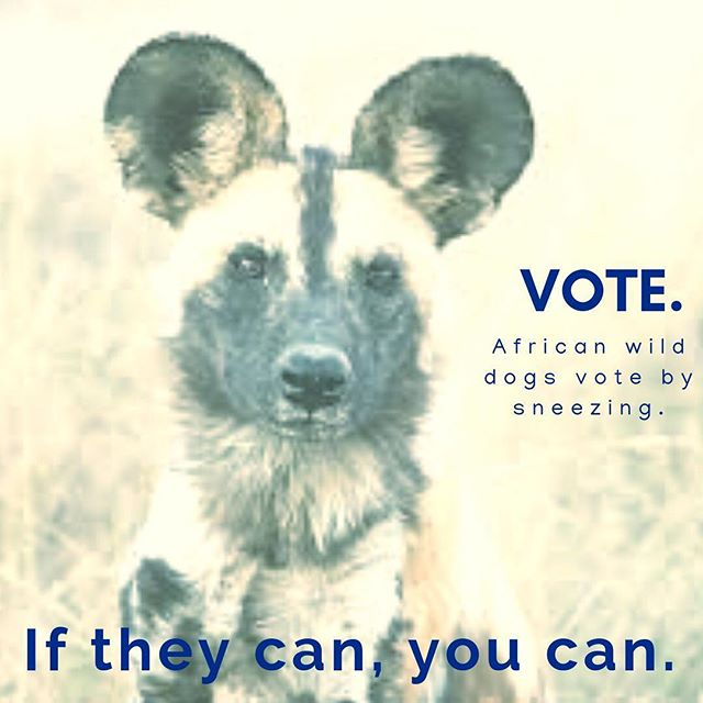 #vote #democracy #dog #dogsofinstagram #election #2018midterms #instavote #instavoting #science #scicomm #secretworld #planetdiscovery #nature_brilliance #knowledge