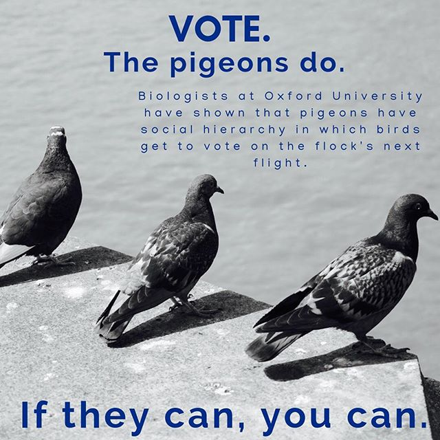 VOTE TODAY!!! #science #scicomm #secretworld #planet discovery #nature_brilliance #knowledge #vote #democracy #election #2018midterms #instavote #instavoting #pigeons