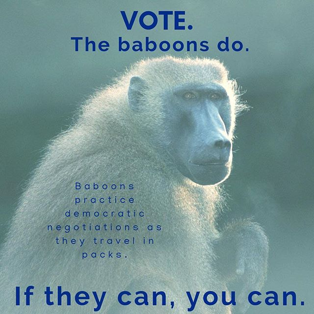 VOTE. #science #scicomm #secretworld #planetdiscovery #nature_brilliance #knowledge #vote #democracy #election #2018midterms #instavote #instavoting #baboon