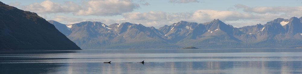Springers - one of two types of black dolphins that frequent the shores of our camp