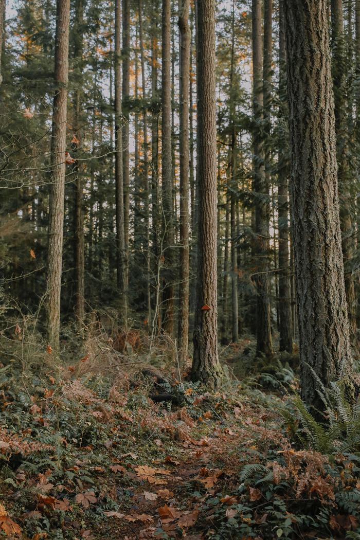 SSL---Trees-4---Website.jpg