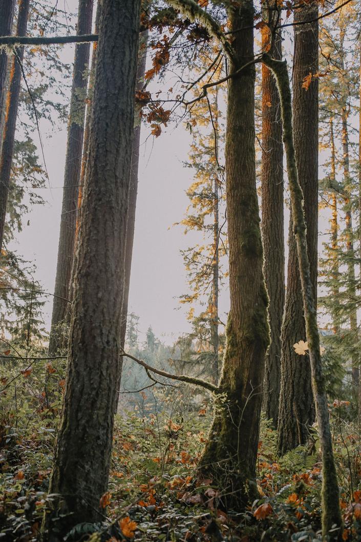SSL---Trees-3---Website.jpg