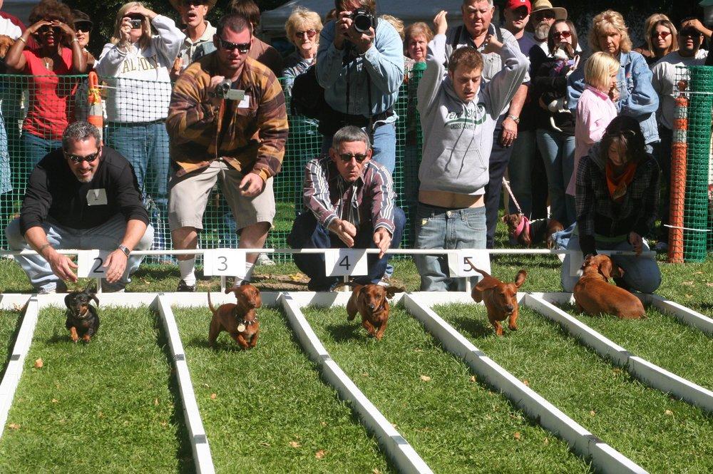 Wiener Dog Races.jpg