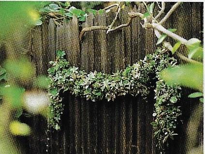 topiary swag.jpeg