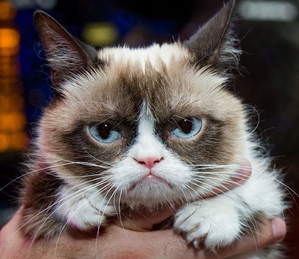 The world famous Grumpy Cat