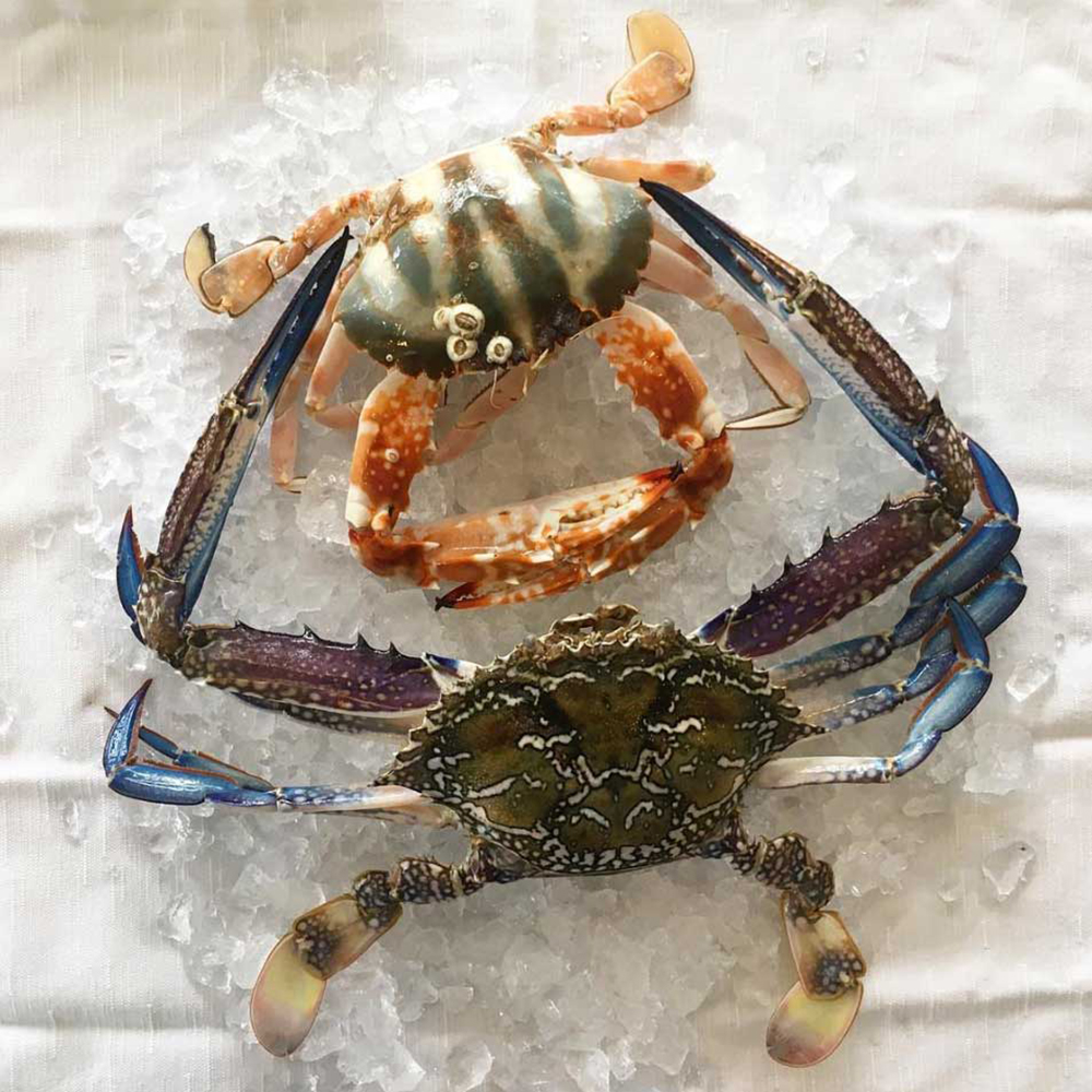 Pipit-Restaurant-Seafood-web.jpg