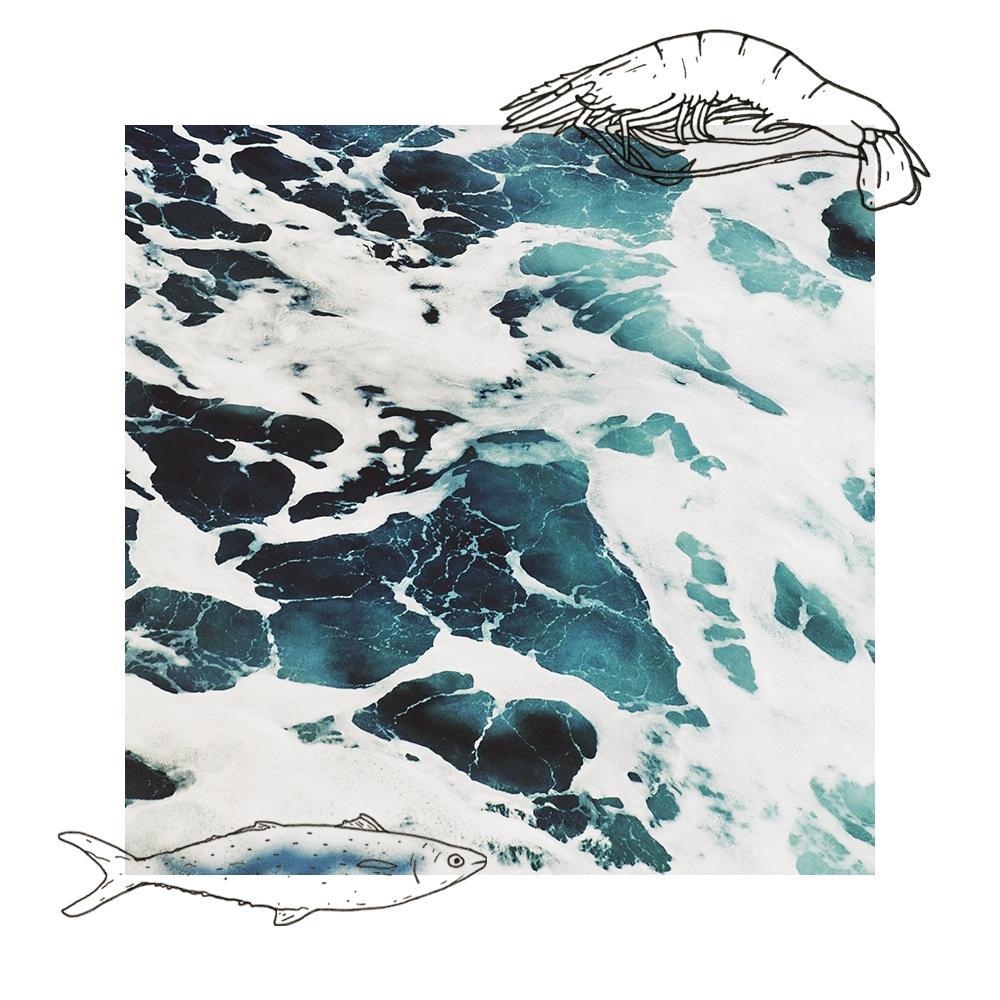 Seafood_Ocean_art_02.jpg