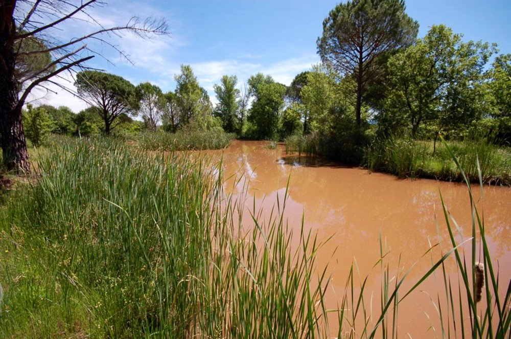 Irrigation (and turtle pond)
