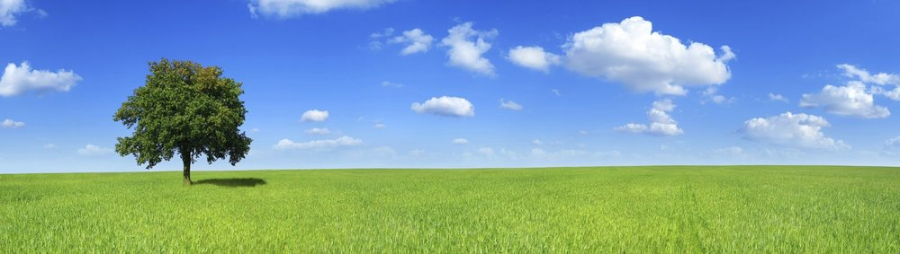 Blue-sky-with-field-and-tree.jpg