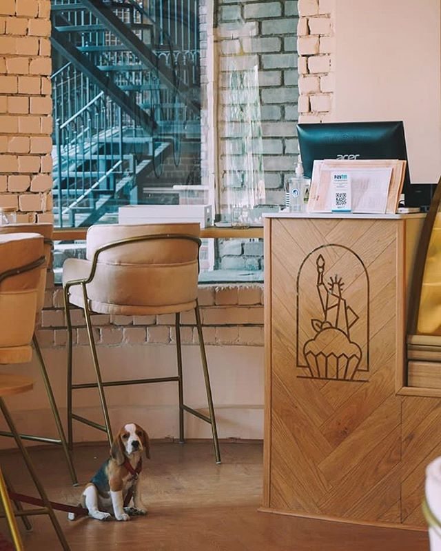 Woof woof! That's a great shot by @clintonjeff  @fifthavebakery is now serving at @32ndavegur  We just wrapped up an uber cool space design in collaboration with @theatelier.interiors.  #wonderfulwednesday #petfriendly #dog #instapets #bakery #spacedesign #excited #branding #packaging #sugar #dessert #newwork #peach #gold #design #art #foodtalkindia #food52 #eeeeeats #lbbgurgaon #gtown #new #32nd #love #life #art #instagood #instamood #instagrammers #gurgaon