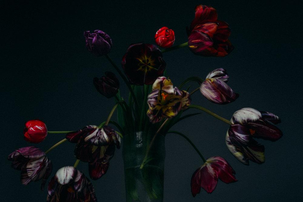 Broken Tulips With Ronald van der Hilst