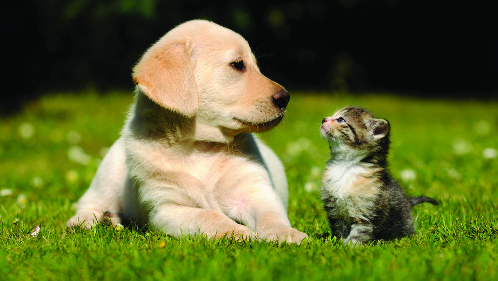 puppy-and-kitten.jpg