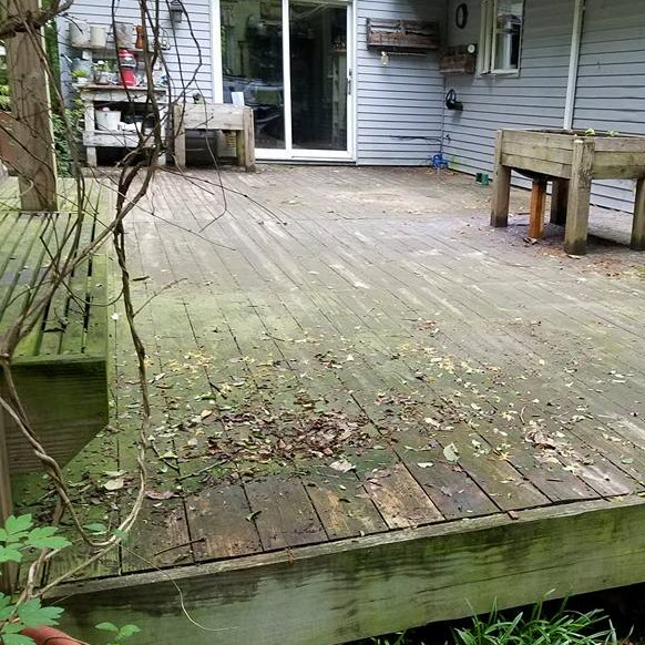 Algae Covered Deck -
