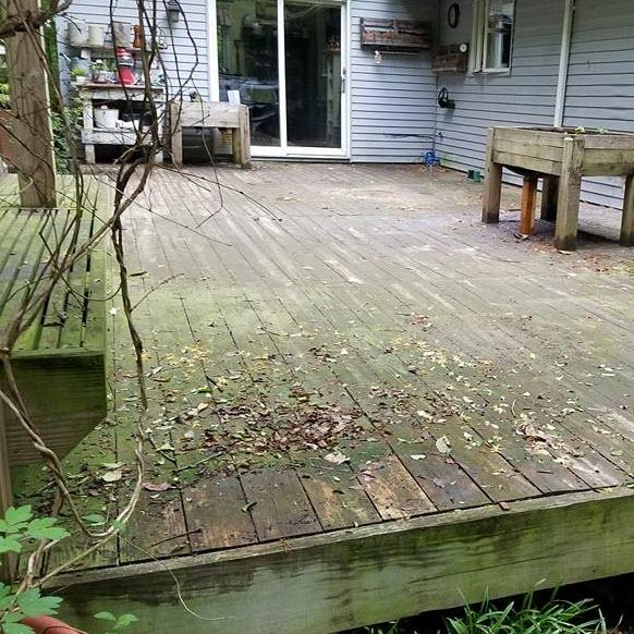 Algae Covered Deck -