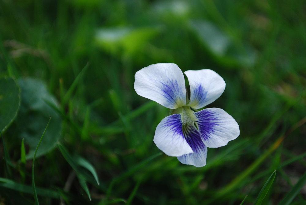 lauradougherty_Tiny Flower.jpg