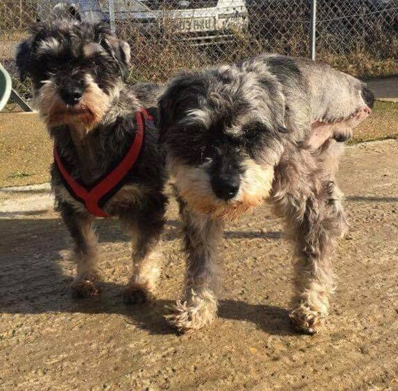 Lacey and Merlin who arrived together at DBARC, both recovering from life saving surgery.