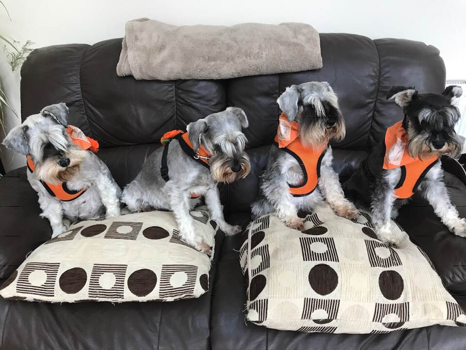 Tilly, LottieBiscuit, HarperLee and BellaBear