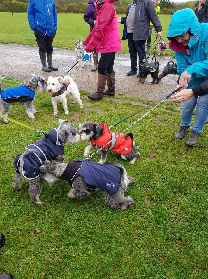 Herrington Park Schnauzerfest 2018