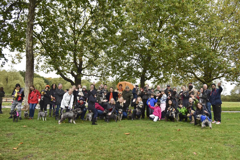 Hampstead Heath Schnauzerfest 2018