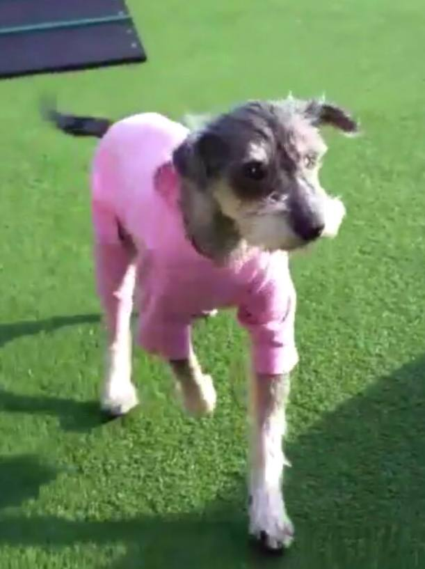 Mila, in her cosy onesie enjoying the winter sun at DBARC, in her first weekend with the team.