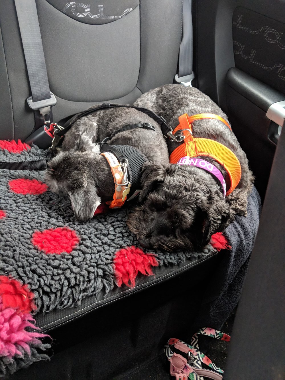 Nova and sister Sally on their way home after her important eye check, March 2019