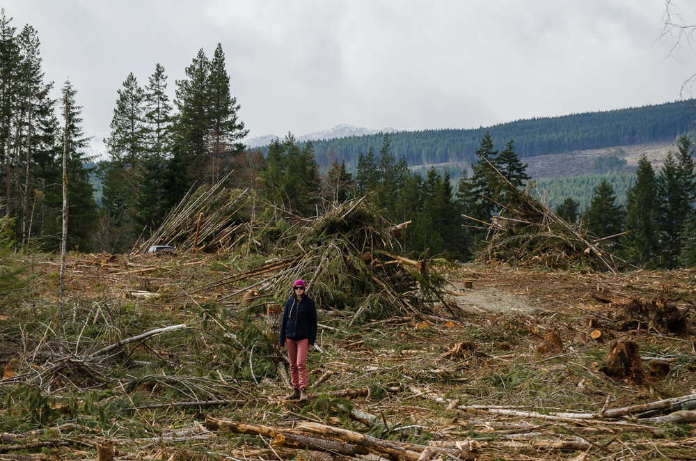 Slash piles near Nanaimo