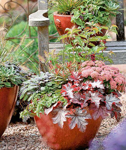 Bollkryss, alunrot, höstljung, cyklamen och prydnadskål är vackra växter att ha vid entrén på hösten.