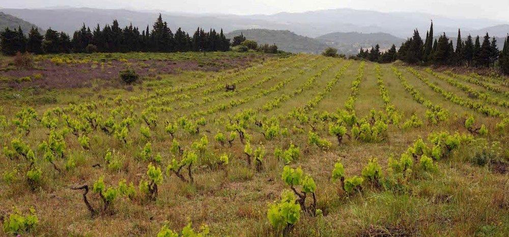 Matin Calme - Millas – Roussillon