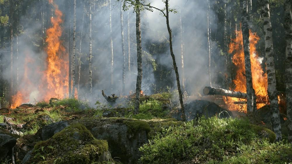 Een bos met veel grond waarvan enkele bomen in brand staan met rook op de achtergrond.