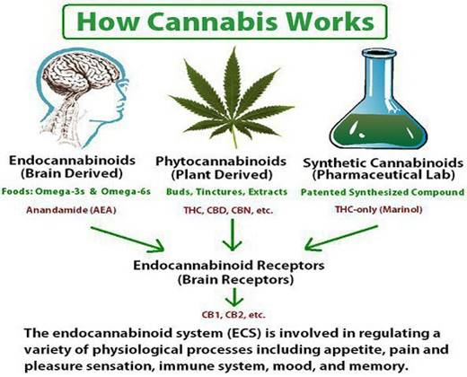 3 Types of Cannabinoids.jpg
