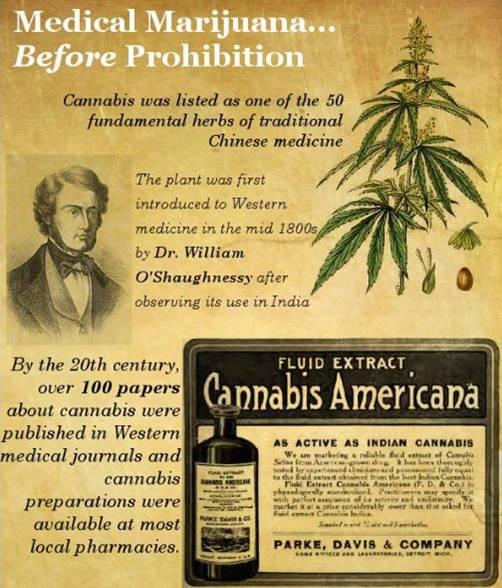 History of Cannabis.jpg