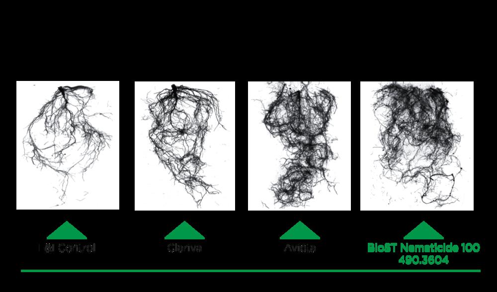 Nematicide Root Volume Comparison.png