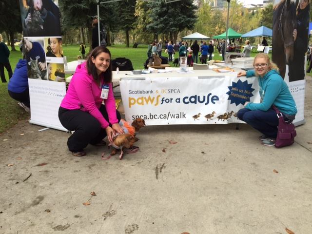 We had the privilege to not only be a sponsor of today's BCSPCA Paws for a Cause walk in Trail, BC, but also to have ATCO's two Daschund Mascot's (Lola & Honey) take part in the walk.
