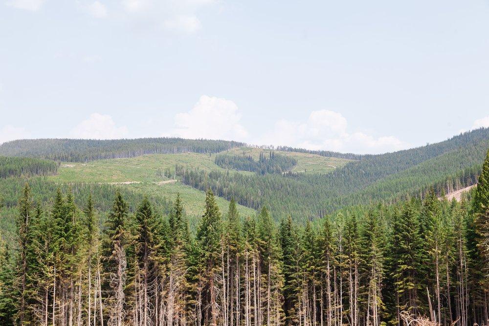 ForestMangement_FieldDevelopment_Gallery_3.jpg