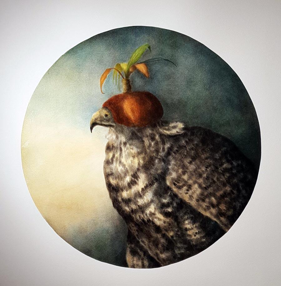 hooded_eagle.jpg