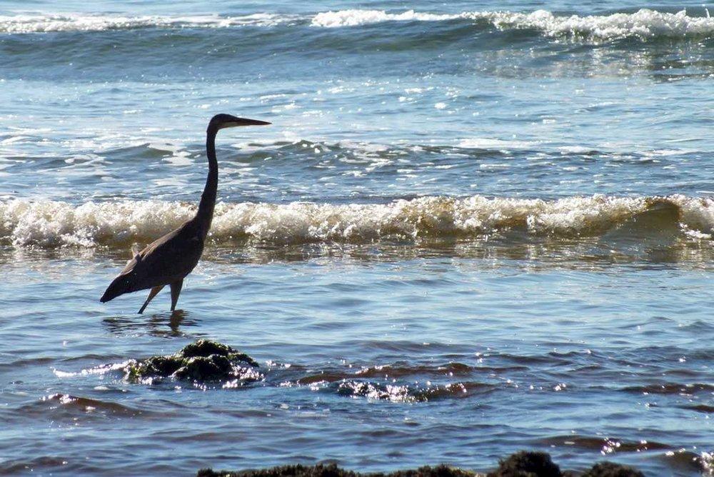 kapoose-creek-heron.1400x0.jpg