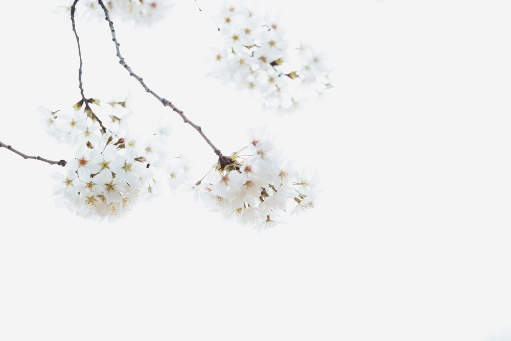 masaaki-komori-628157-unsplash.jpg