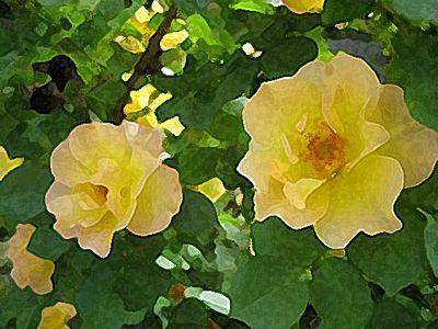 Rosesps