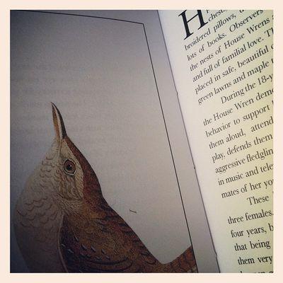 Erin's book1